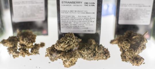 sequestri cannabis light